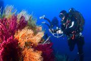 Le acque dei mari più trasparenti dopo il lockdown. I risultati della campagna del Ministero dell'Ambiente, Snpa e Capitanerie di porto - Guardia Costiera